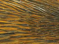 Whiting Hackle Hebert Rusty Natural Dun
